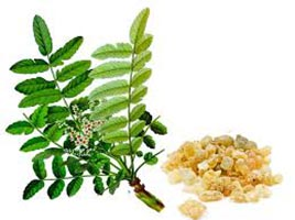 boswellia-serrata-extract